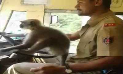 KSRTC Bus Driver Suspends For Letting Monkey Take Steering Wheel