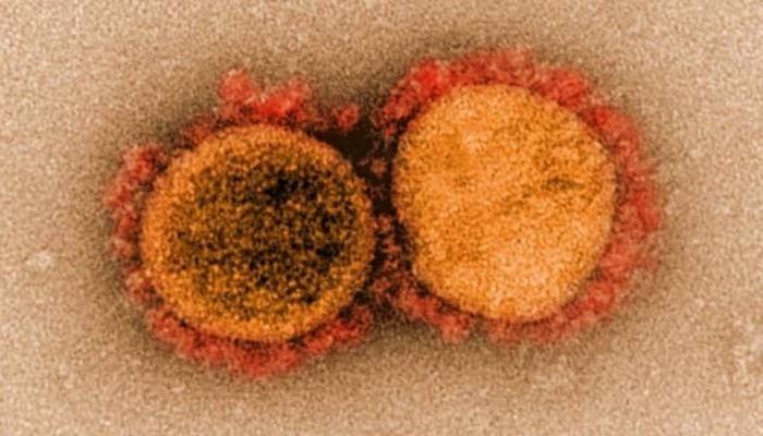 new coronavirus strain