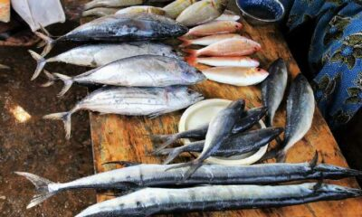 Indian Fish Varieties and their Benefits in Tamil